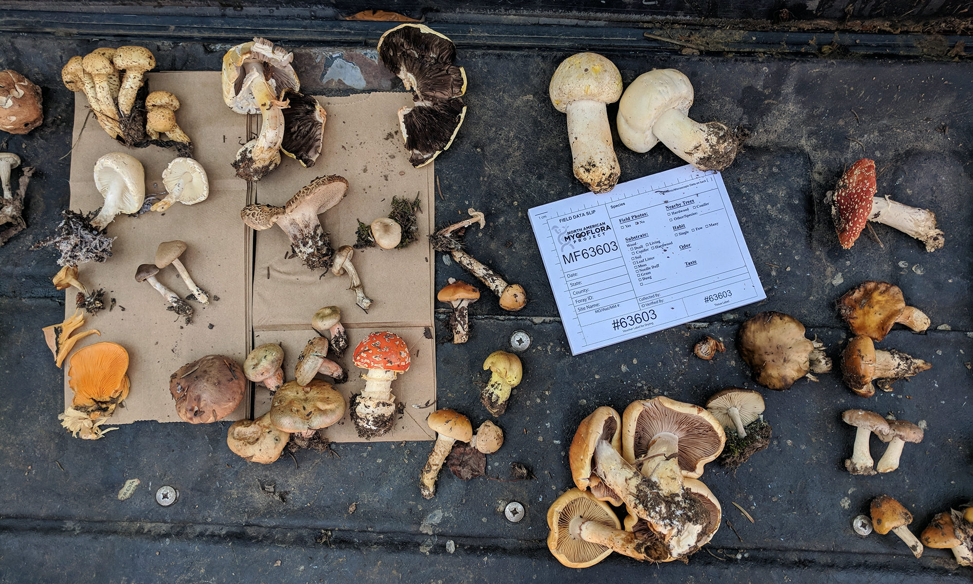 Pikes Peak Mycological Society